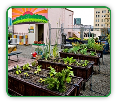 Rooftop Vegetable Gardening Guide