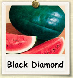 How to Grow Black Diamond Watermelon | Guide to Growing Black Diamond Watermelon
