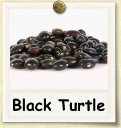 How to Grow Black Turtle Beans | Guide to Growing Black Turtle Beans