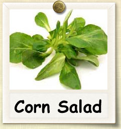 How to Grow Corn Salad | Guide to Growing Corn Salad