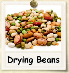 How to Grow Drying Beans | Guide to Growing Drying Beans