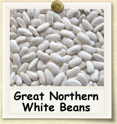 How to Grow Great Northern White Beans | Guide to Growing Great Northern White Beans