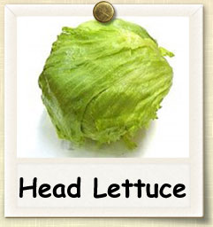 How to Grow Head Lettuce | Guide to Growing Head Lettuce