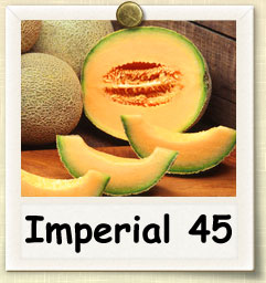 How to Grow Imperial 45 Cantaloupe | Guide to Growing Imperial 45 Cantaloupe
