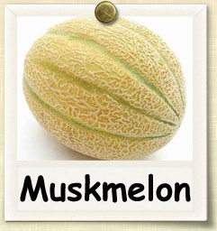 how to grow muskmelon guide to growing muskmelon
