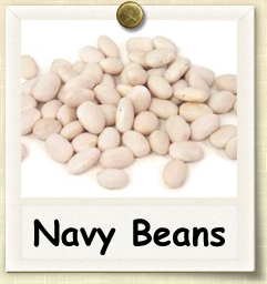 How to Grow Navy Beans | Guide to Growing Navy Beans