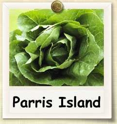 How to Grow Parris Island Lettuce | Guide to Growing Parris Island Lettuce