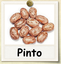 How To Grow Pinto Beans Guide To Growing Pinto Beans