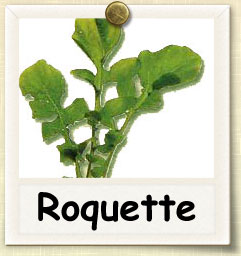 How to Grow Roquette | Guide to Growing Roquette