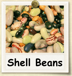 How to Grow Shell Beans | Guide to Growing Shell Beans
