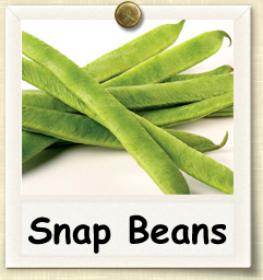 How to Grow Snap Beans | Guide to Growing Snap Beans