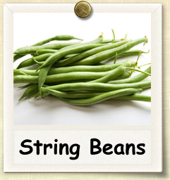 How to Grow String Beans | Guide to Growing String Beans