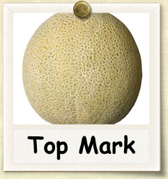 How to Grow Top Mark Melon | Guide to Growing Top Mark Melon