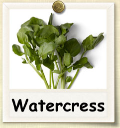How to Grow Watercress | Guide to Growing Watercress