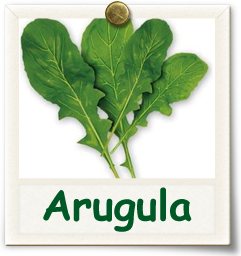 Heirloom Arugula Seed - Seeds of Life