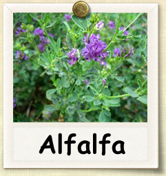 How to Sprout Alfalfa | Guide to Sprouting Alfalfa
