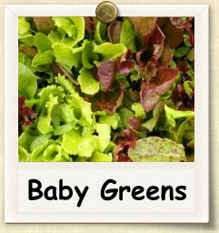 How to Grow Baby Greens | Guide to Growing Baby Greens