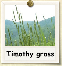 How to Grow Timothy Grass | Guide to Growing Timothy Grass