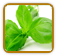 How to Grow Basil | Guide to Growing Basil