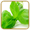 Organic Basil Seed | Seeds of Life