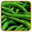 Organic Bean Seed | Seeds of Life