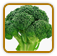 Heirloom Broccoli Seed | Seeds of Life