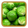 Heirloom Brussels Sprout Seed | Seeds of Life