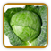 Guide to Growing Cabbage