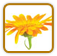 How to Grow Calendula | Guide to Growing Calendula