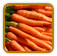 Heirloom Carrot Seed | Seeds of Life