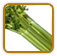 Guide to Growing Celery