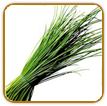 Organic Chive Seed | Seeds of Life