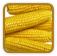 Heirloom Corn Seed | Seeds of Life