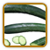 Heirloom Cucumber Seed | Seeds of Life