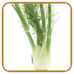 Organic Fennel Seed | Seeds of Life