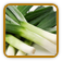 How to Grow Leek | Guide to Growing Leek