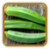 Heirloom Okra Seed | Seeds of Life