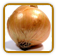 Heirloom Onion Seed | Seeds of Life