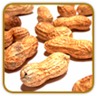 Organic Peanut Seed | Seeds of Life