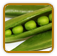 Heirloom Pea Seed | Seeds of Life