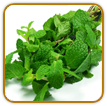 Organic Peppermint Seed | Seeds of Life