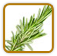 How to Grow Rosemary | Guide to Growing Rosemary