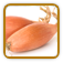 Heirloom Shallot Seed | Seeds of Life