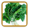 Heirloom Spinach Seed | Seeds of Life