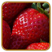 Organic Strawberry Seed | Seeds of Life