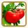 Heirloom Tomato Seed | Seeds of Life