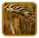 Heirloom Wheat Seed | Seeds of Life